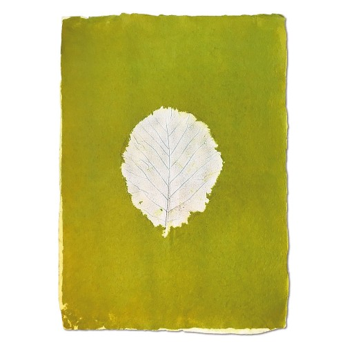 Wandposter Leaf Grün | Sundara Paper Art
