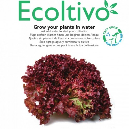 Roter Salat Ricciolina Hydrokultur Pflanzset | Ecoltivo