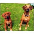 LUPO NATURAL Bio Hundefutter