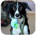Beco Pets Kotbeutel-Spender einfach befestigen