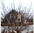 Bird Box Vogel Glück