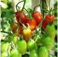 KleePura – veganer Bio-Dünger | grünerdüngen