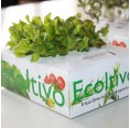 Ricciolina Salat Hydrokultur Pflanzset Salatzucht   Ecoltivo
