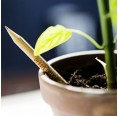 Sprout Buntstift