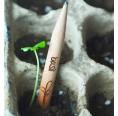 Sprout Bleistift