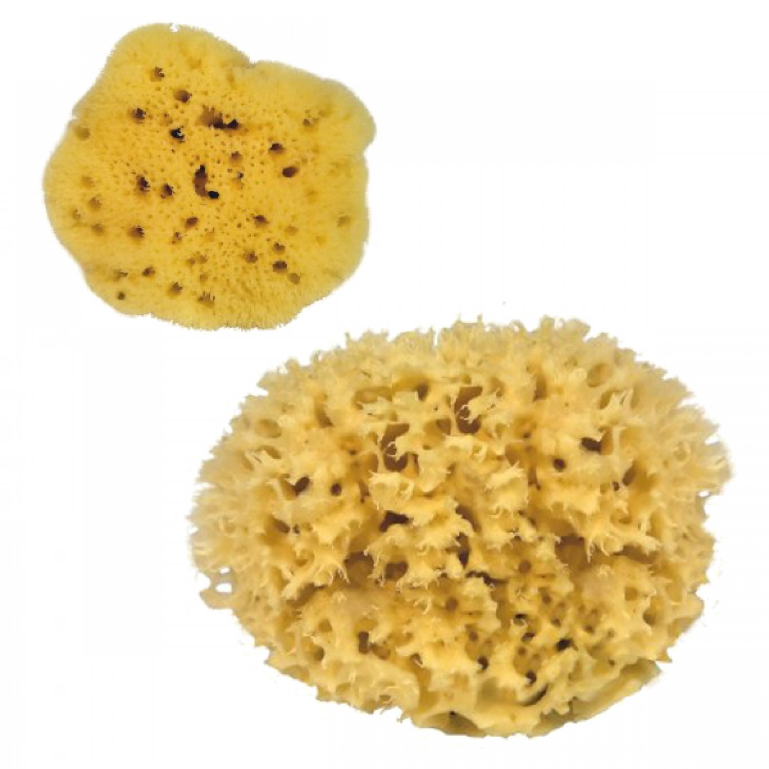 Natural Sponges - Bath Sponges for sensitive skin | Croll & Denecke