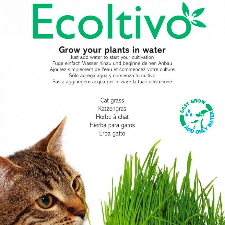 Katzengras Hydrokultur Pflanzset – Smart Garden | Ecoltivo