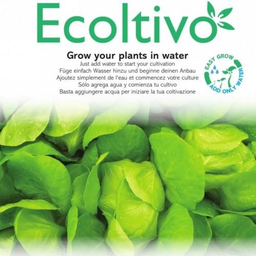 Flach-Blattsalat Blonde Hydrokultur Pflanzset | Ecoltivo