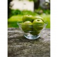 Fruit Bowl Cotula by Nature's Design