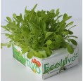 Blond Lettuce smooth leaf Hydroponics Planting Set | Ecoltivo