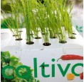Cat Grass Hydroponics Planting Set Smart Garden | Ecoltivo