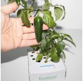 Hot Pepper Hydroponics Set Indoor Growing | Ecoltivo