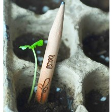 Sprout – Plant your Pencil – different seeds